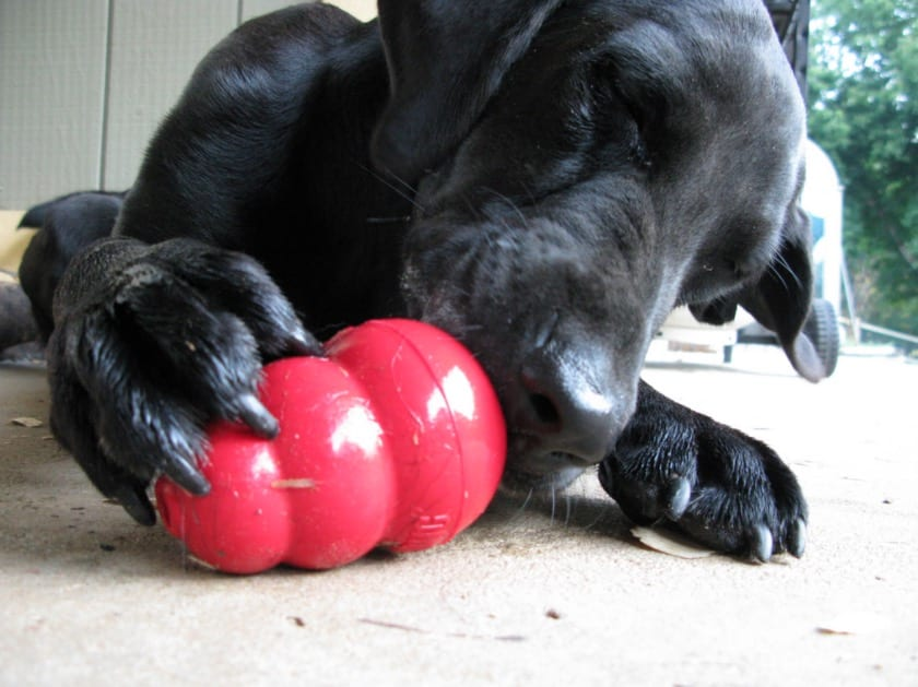 Gifts you can give your dog | Monagiza